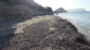 Spiaggia il Macello