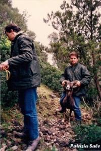 Censimento mufloni anni 90