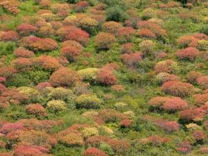 Euphorbia di Arborea